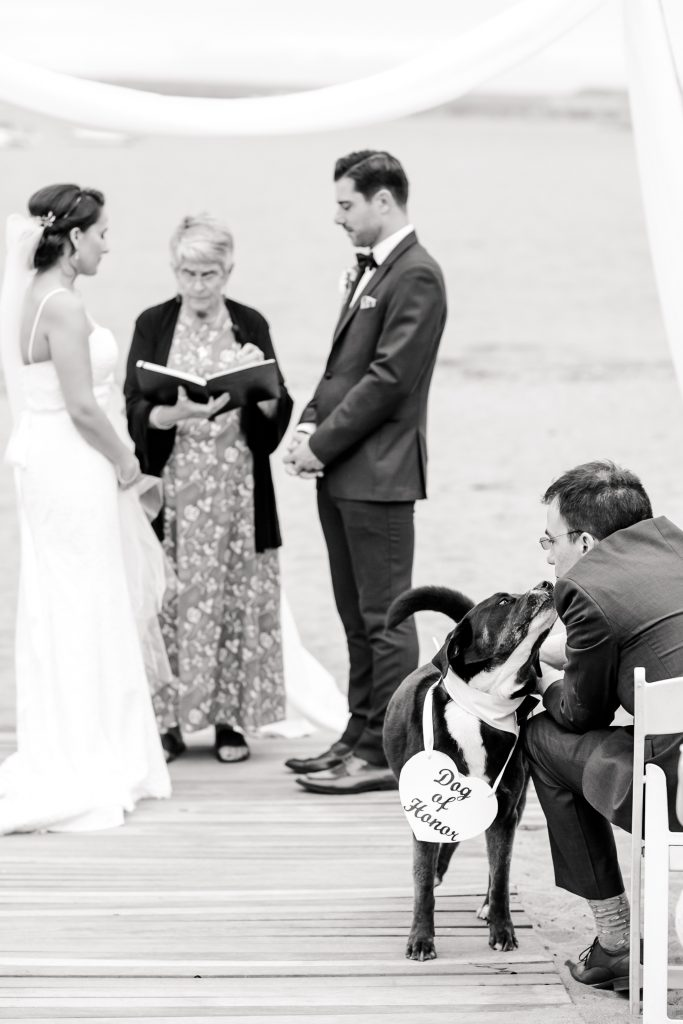 This dog of honor was so well behaved for their parent's wedding ceremony at Anthony's Oceanview in New Haven, CT.